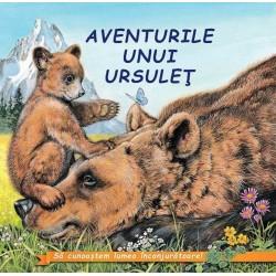 Aventurile unui ursulet